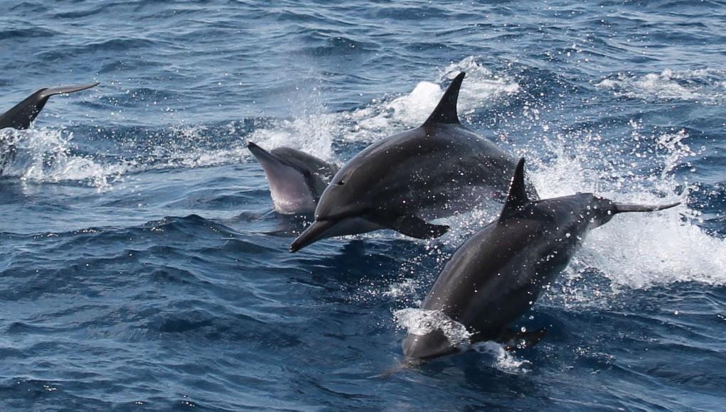 Dolphins Delfine