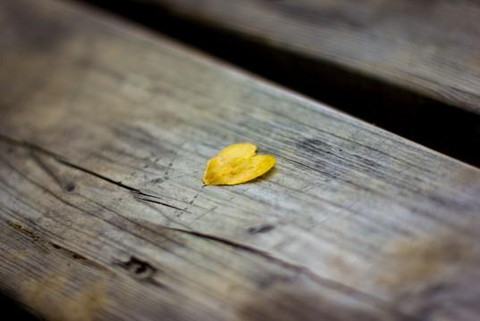 Blatt Leaf Herz Heart