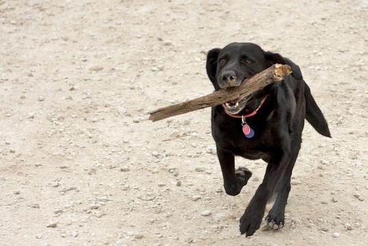Dog Fetch Stöckchen