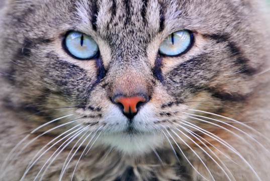 Katze Katzenaugen